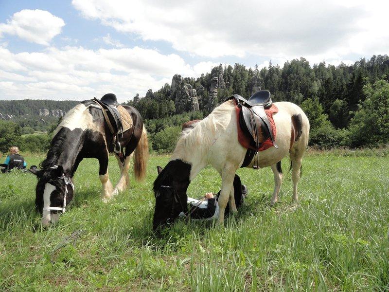 Celodenní vyjížďka na koni