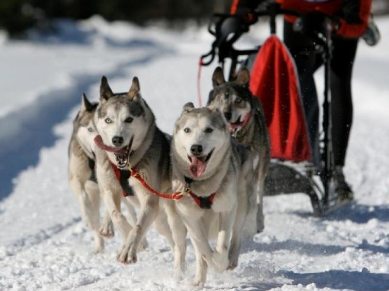 Mushing – jízda se psím spřežením